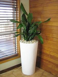 Green ideas for your home interiors decorating with for Interior decorating with indoor plants