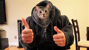 CAT HUMAN! - YouTube
