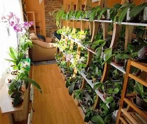 Blumenregal Selber Bauen : meine gro e leidenschaft die phalaenopsis bei mir daheim ~ Orissabook.com Haus und Dekorationen