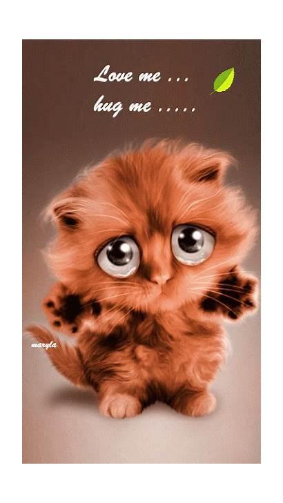 Hug Animals Hugs Cat Animated Funny Cats