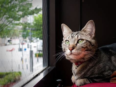 cats better dogs than why reasons marser moment getty looking