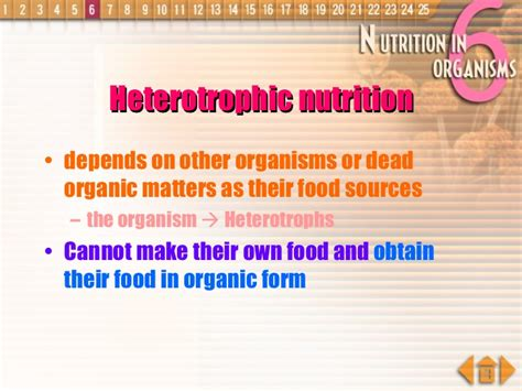 an organism able to form nutritional organic substances nutrition in organisms plants