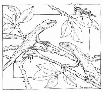 Nature Coloring Pages Scene Drawing Anole Printable