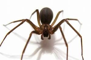 Que Comen las Arañas? Donde Viven, Como Nacen