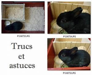Maison Pour Lapin : lapin nain astuce nettoyage de la cage briko d ko ~ Premium-room.com Idées de Décoration