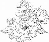 Peony Peonies Japanese Clipart Painting Flower Drawing Flowers Ink Vector Drawings Illustration Chinese Line Tattoo Isolated Getdrawings Clipground Drawn Coloring sketch template