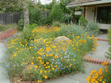 happy gardens california poppies and baby blue mingle in this happy