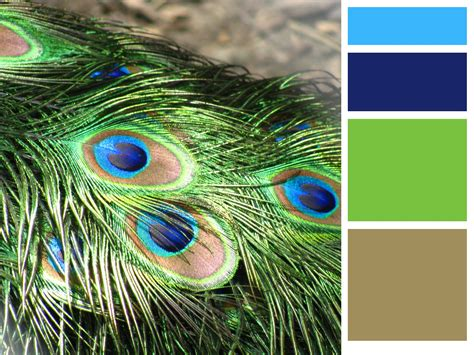 peacock colors two southern grits