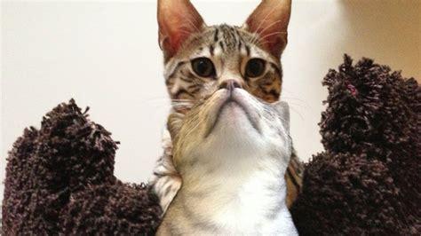 fotografias de gatos tomadas en el momento exacto