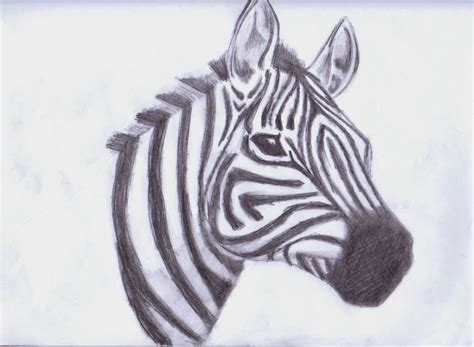 Animals To Draw For Art Wwwpixsharkcom Images