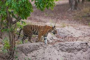 Amazing Wildlife Experiences In India Travelogues From