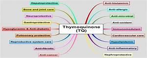 Black Seed Extract Nigella Sativa Thymoquinone Powder Cas 490