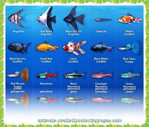 images  fish lover  pinterest blue