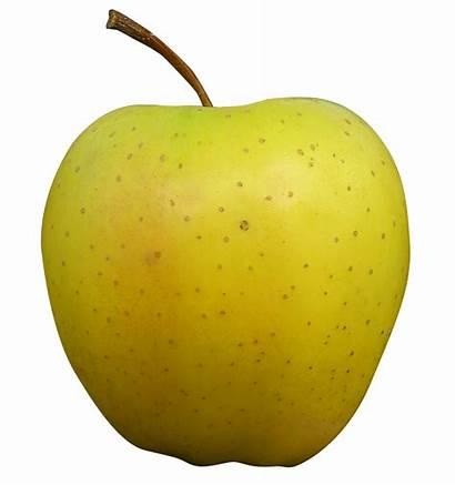 Apple Golden Transparent Fruits Pngpix Purepng