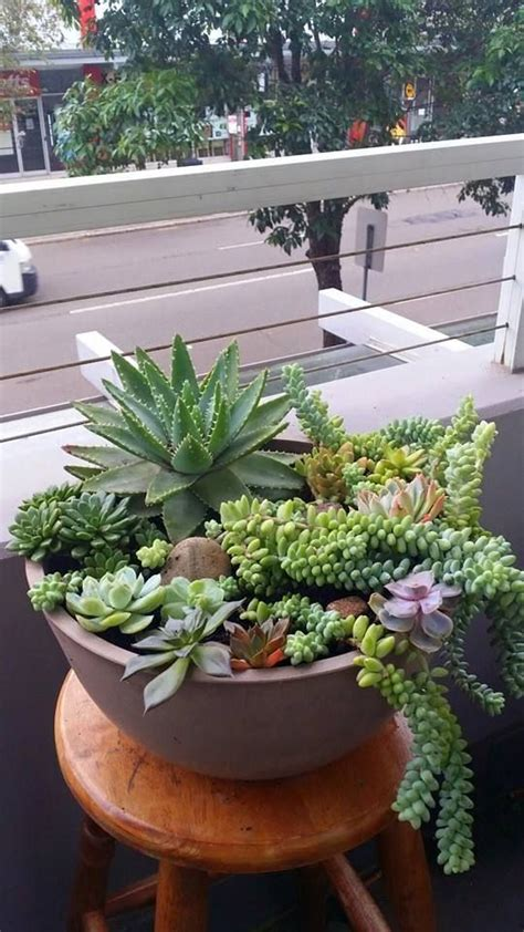 how to care for potted succulents 81950 best images about love everything about gardens on pinterest english gardens container