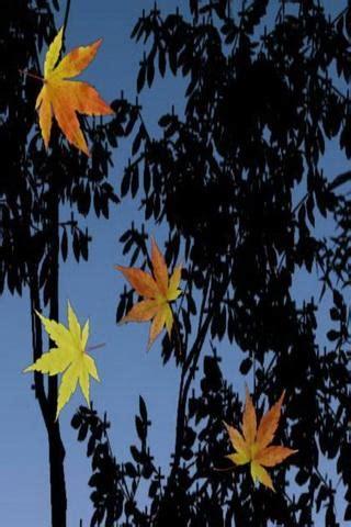 fall leaves  wallpaper gallery