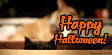 halloween ghost scary animated gifs  animations