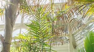 Plant Collections | Phipps Conservatory and Botanical ...