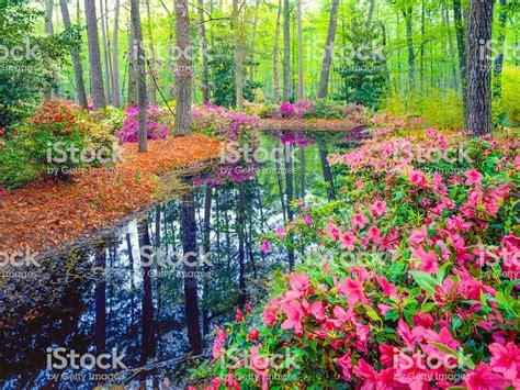 primavera in giardino boschi di primavera nel giardino sud fotografie