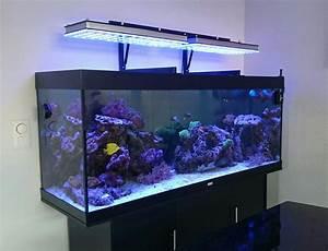 Aquarium Set Led : atlantik series choosing proper led aquarium lighting ~ Watch28wear.com Haus und Dekorationen