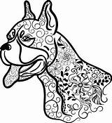 Boxer Coloring Dog Head Dogs Adult Doodle Boxers Istockphoto Cut sketch template