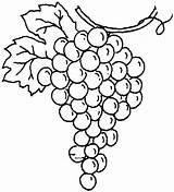 Grapes Coloring Printable sketch template