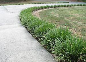 1000+ images about Monkey grass & plants that grow in the