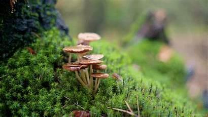 Living Giphy Fall Stills Autumn Bark Tuinieren