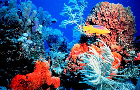 gold wall paint colors global warming and coral reefs coral reefs die