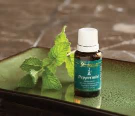 Images of Young Living Peppermint Oil