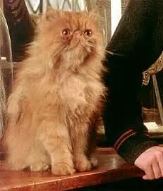 harry potter cat names krummbein harry potter lexikon fandom powered by wikia