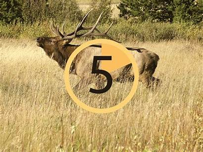 Countdown Deadline Final License Nears Drawing Colorado