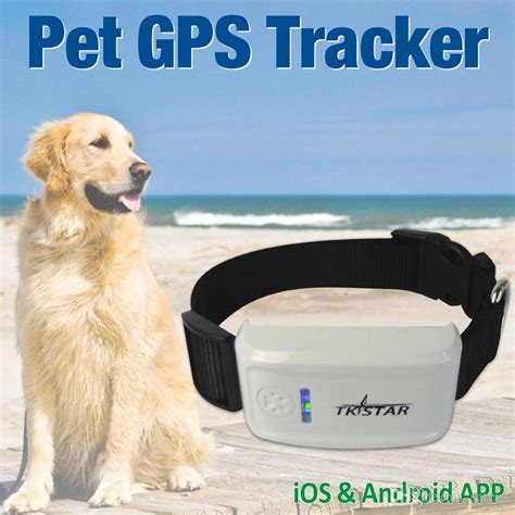 gps tracker  collar waterproof real time locator