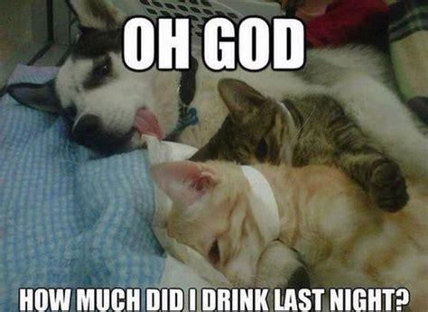 Dog And Cat Memes - oh god dog humor