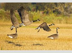 How Do Birds Survive Winter? Cornell Lab of Ornithology