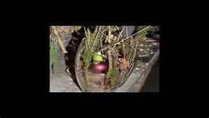Amaryllis Im Glas : amaryllis im glas youtube ~ Eleganceandgraceweddings.com Haus und Dekorationen