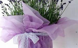 Lavendel Pflanzen Im Topf : garten pflanzen ber 1000 ideen f r gartengestaltung und pflanzenanbau freshideen 1 ~ Frokenaadalensverden.com Haus und Dekorationen