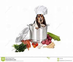 stock photo basset hound dog big cooking pot image