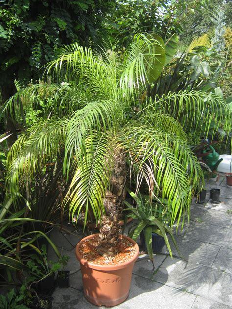 augen auf beim palmenkauf das gruene netzwerk