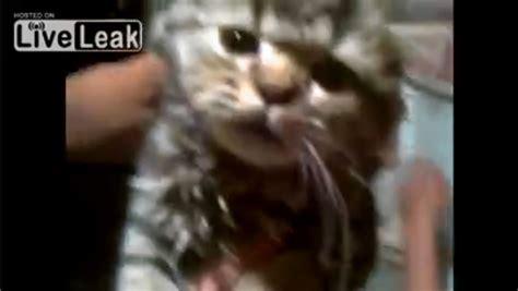 warning graphic video cruel russians put cat  dryer