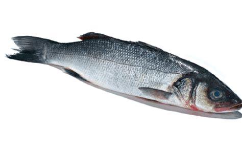 cuisiner le bar cuisiner le loup de mer 28 images les 25 meilleures id