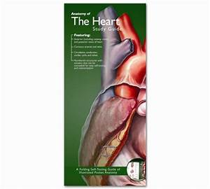 Anatomy Of The Heart Pocket Study Guide