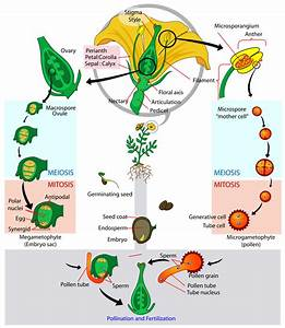Biology Plant Reproduction