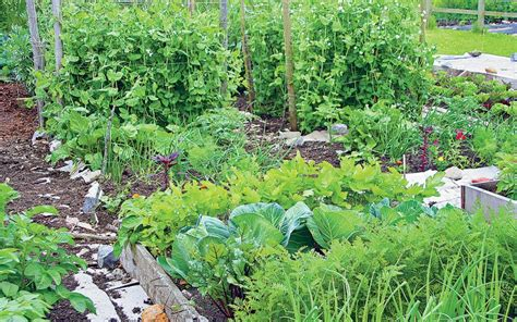 A Better Way To Grow Vegetables?