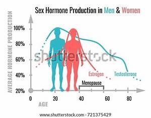 Hormone Production Men Women Average Stock Vector