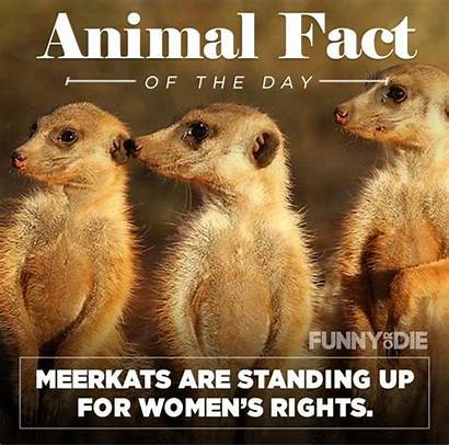 Animal Funny Facts Pee Might