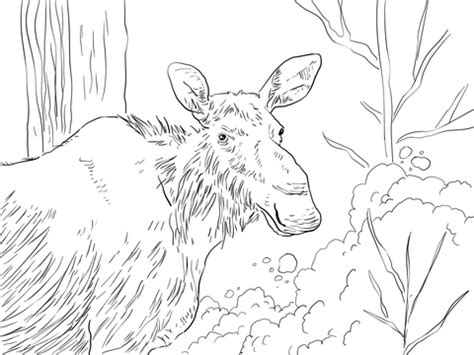 eastern moose coloring page super coloring