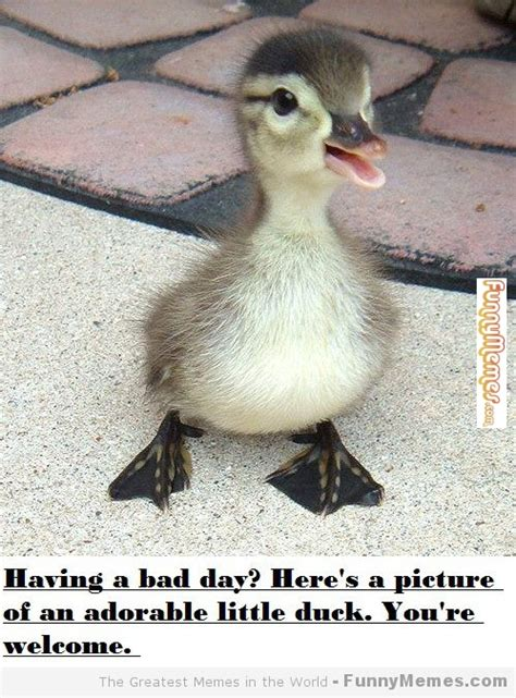 Bad Day Meme Memes About A Bad Day Image Memes At Relatably