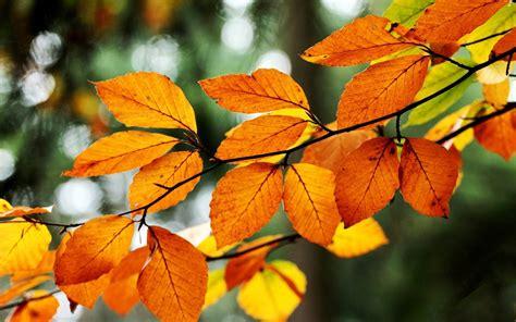 nature, Macro, Leaves, Fall Wallpapers HD / Desktop and ...