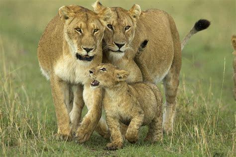 Wildlife Animals Pictures From Wildlife Animal Planet